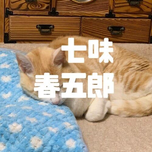 七味春五郎のWordPressアタック
