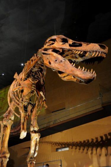 恐竜体色実情